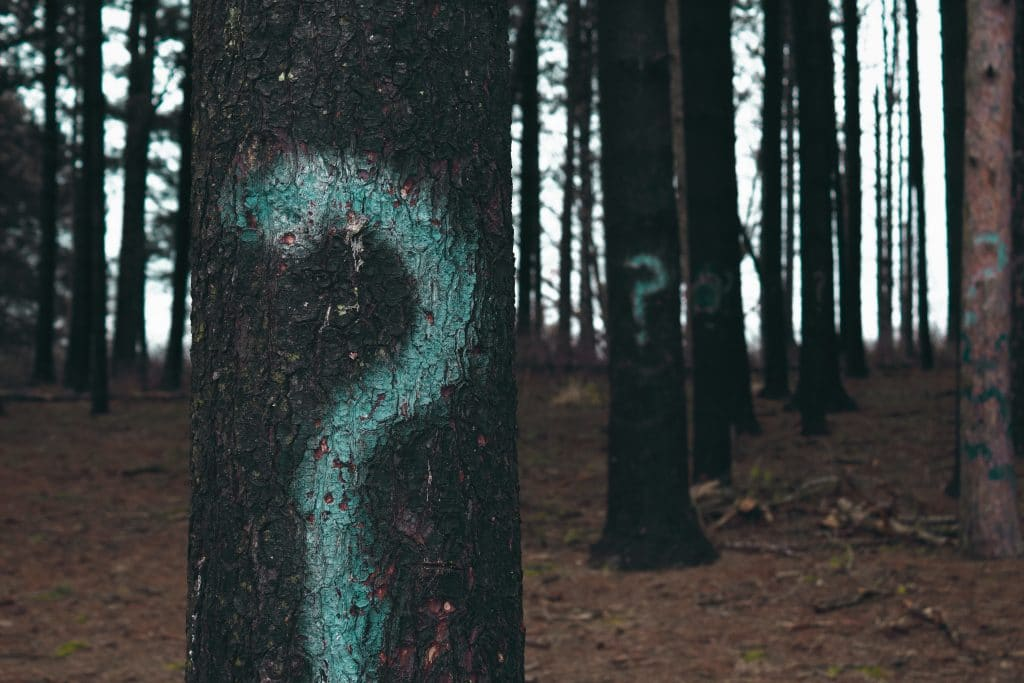 painted question marks on trees